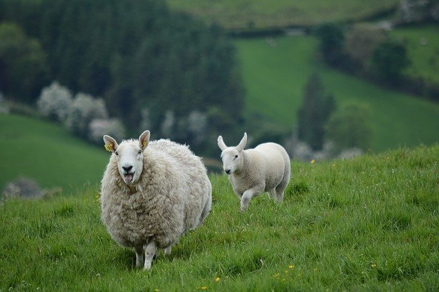 Fietsen door Ierland de mooiste routes & praktische tips