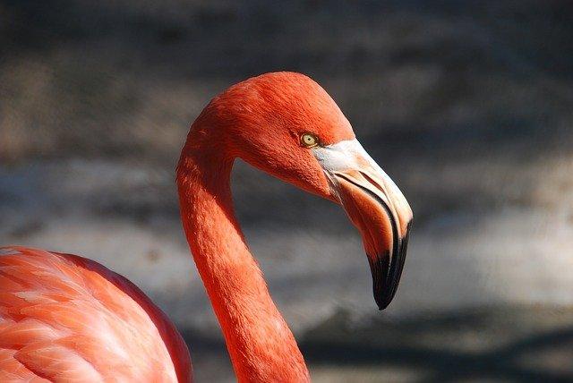 Flamingo's spotten op de fiets
